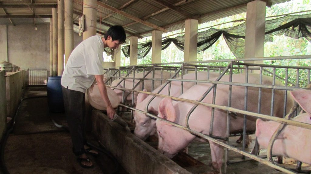 How has the bank support for pig farmers?